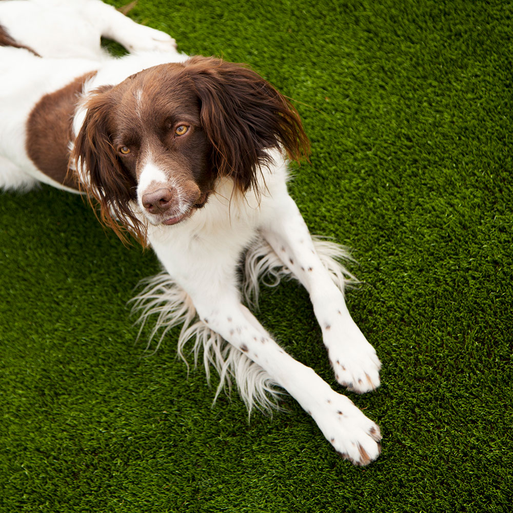 kunstgras honden